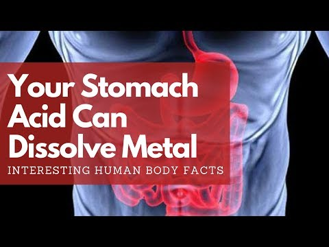 Can Stomach Acid Dissolve Metal? Interesting Human Body Facts