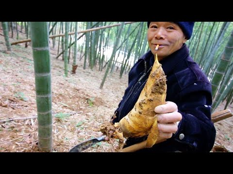Exotic Chinese Street Food - BAMBOO HUNTING + Village Food t