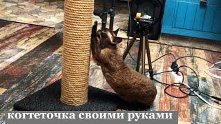 Когтеточка своими руками. Когтеточка для кошек как сделать своими руками как сделать когтеточку дома