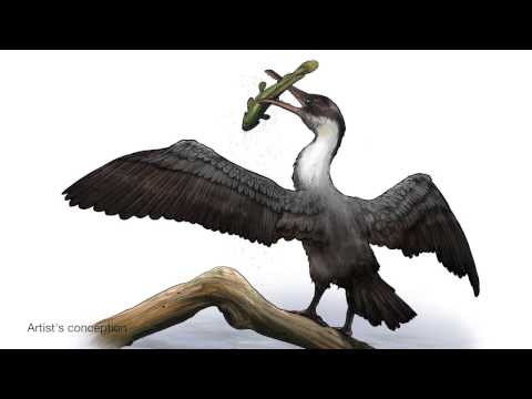 New Arctic Bird Species Discovered from 90 Million Year Old Fossils
