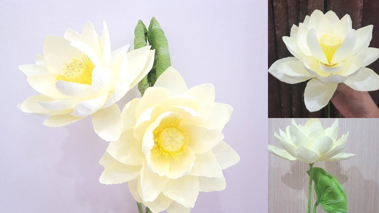 Crepe Paper Flowers How To Make Paper Lotus Flower From Crepe Paper