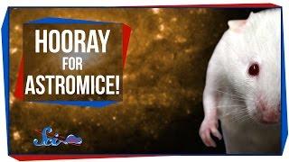 Hooray for Astromice!