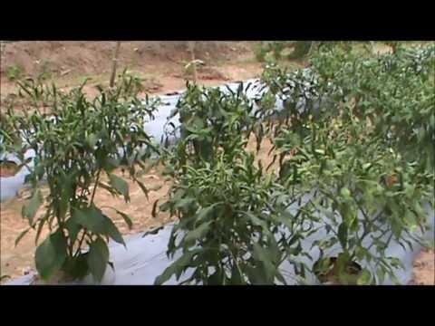Ex-Cop turned organic gardener