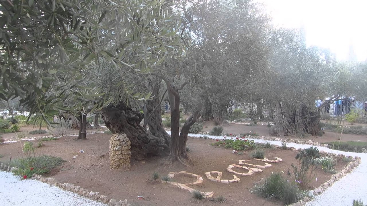 the garden of hsemane jerusalem israel jesus prayed there