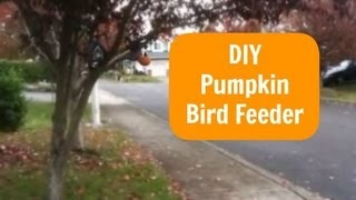 Diy Pumpkin Bird Feeder