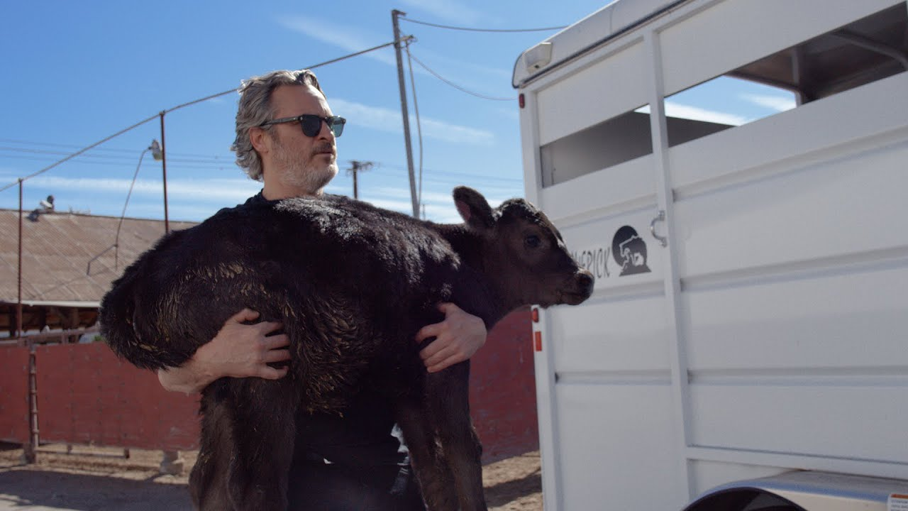 Gallery video thumbnail - Joaquin Phoenix Rescues Mother Cow and Newborn Calf Day after Academy Awards Win