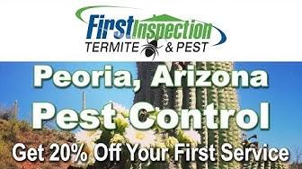 Pest Control Peoria AZ - First Inspection - Termites