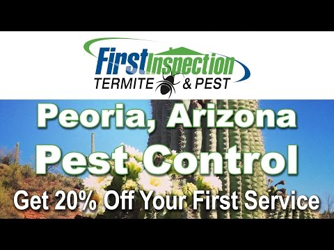 Pest Control Peoria AZ - First Inspection - Termites