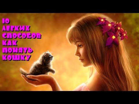 10 легких способов как понять кошку