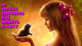 Как понять кошку? 10 легких способов