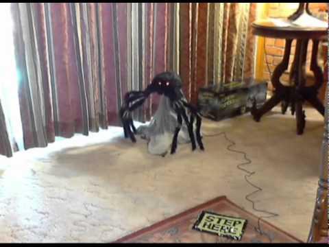 Spirit Jumping Spider Youtube