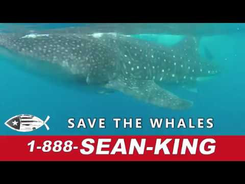Sean King, Car Accident, Medical Malpractice, Wrongful Death, Attorney, Lawyer