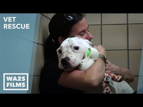 Animal Aid Unlimited for Starving Chained Pit Bull on VET Rescue: # 1 Saving Nemo in D House