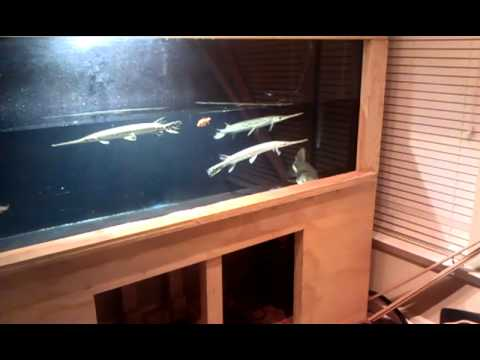 New 500 gallon plywood tank youtube for Plywood fish tank