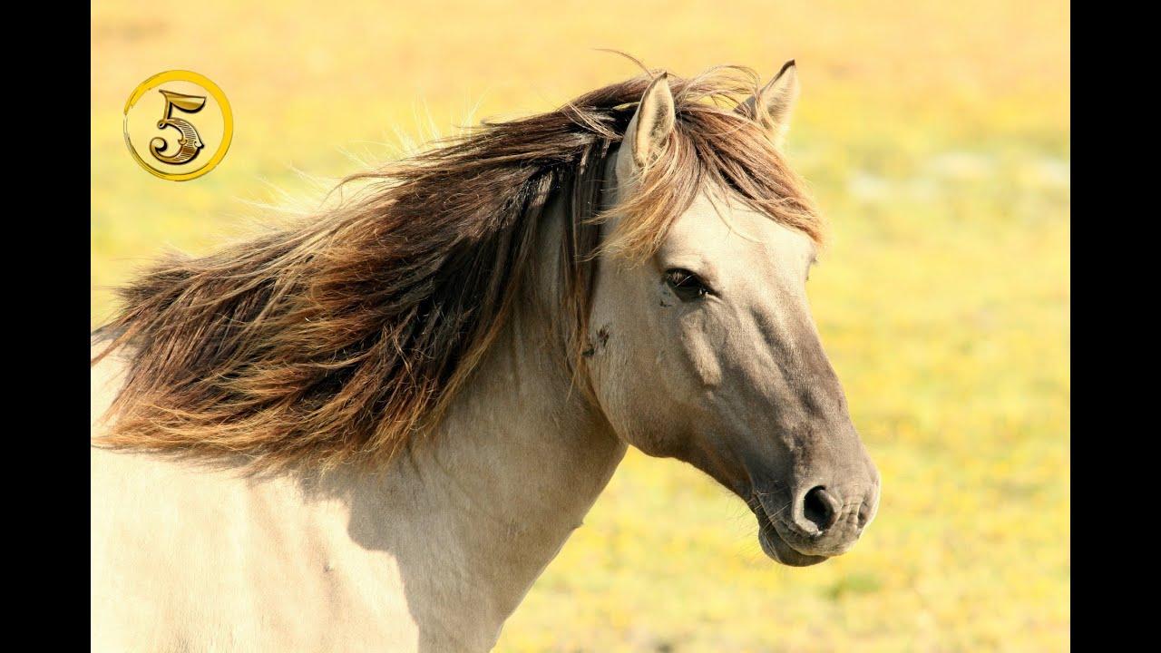 Złota Piątka Najdroższe Konie świata Youtube