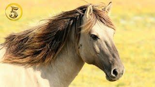 Złota Piątka: Najdroższe konie świata!