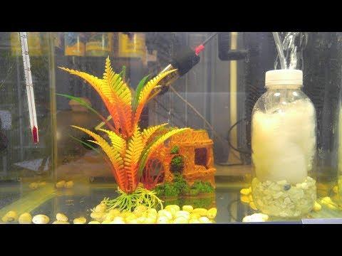어항 수질정화 필터 만들기(DIY fish tank filter)