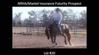 Magnum Full of Roses 2014 NRHA / Markel Insurance Futurity Prospect Sale  Lot #20