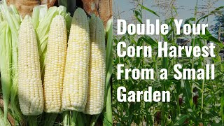 Double Your Corn Harvest from a Small Garden