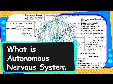 Biology - Autonomous nervous system   - Control and coordination - Part 6 - English