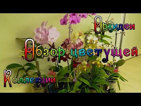 Обзор коллекции цветущих орхидеи, Биг Лип,  Филадельфия, Ванда, Дендробиум, Камбрия и другие!
