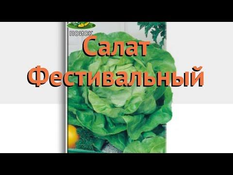 Салат обыкновенный Фестивальный Кочанный 🌿 обзор: как сажать, семена салата Фестивальный Кочанный