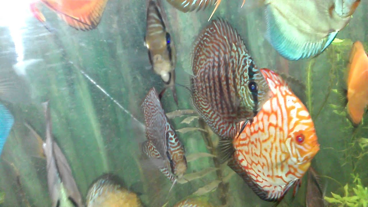 Fish aquarium in kurla -