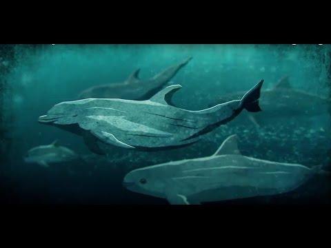 Souls of the Vermilion Sea- Full Endangered Vaquita Documentary