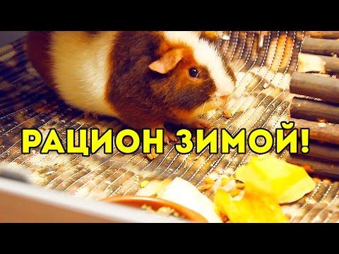 Рацион Морских Свинок Зимой: СОЧНЫЙ КОРМ / SvinkiShow