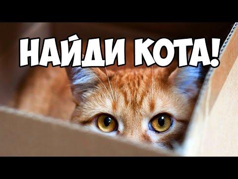 Найди кота, часть 3 🐈 БУДЬ В КУРСЕ TV