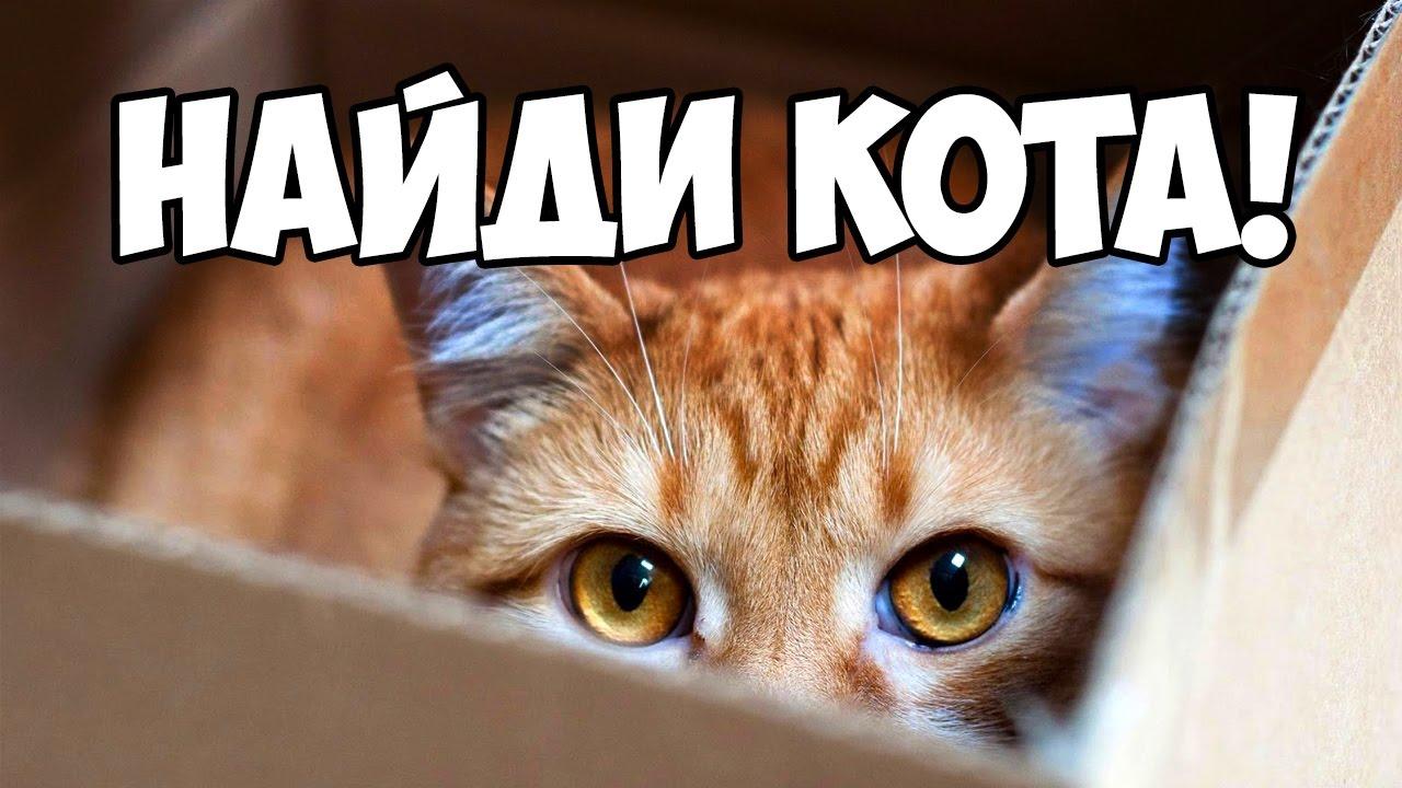 Кто поможет найти кота