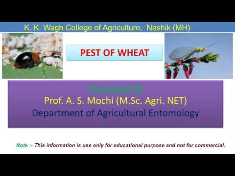 Wheat Pest and