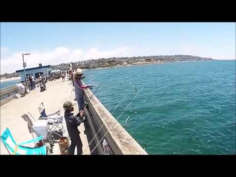 San Diego Fishing: (OB Pier) - Bonito Run and Mack Attack 19/20-JUL-2014