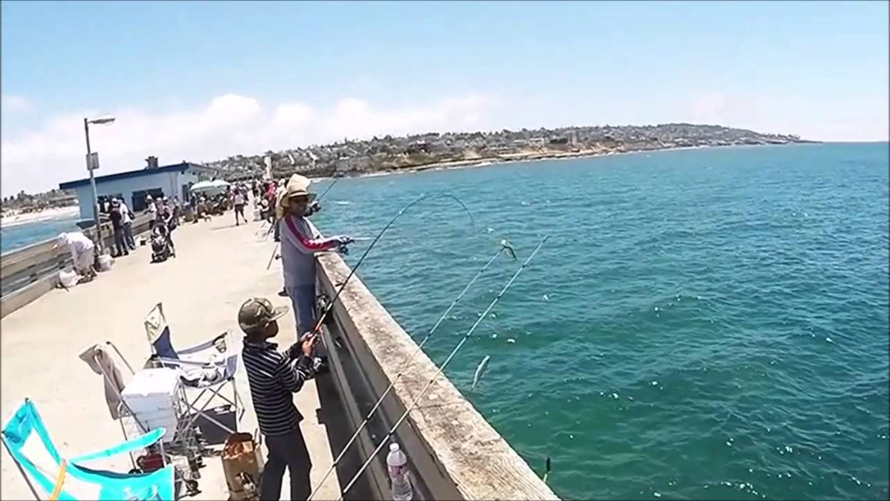 San diego fishing ob pier bonito run and mack attack for Fishing in san diego
