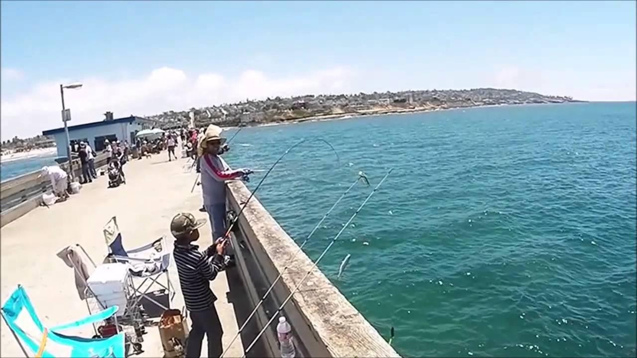 San diego fishing ob pier bonito run and mack attack for San diego sportfishing fish counts