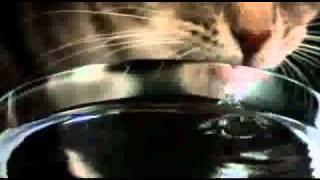 Кот в замедленной съёмке