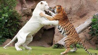 Настолько Шокирующих Битв Животных Вы Еще не Видели | Топ 10