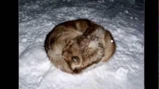 A Northern Christmas - Nunavut
