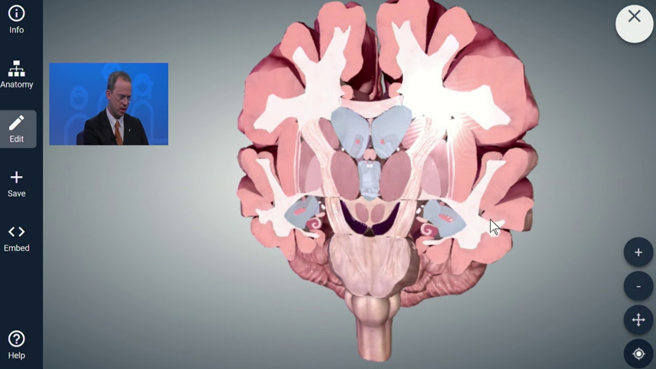 Neuroanatomy of Memory - YouTube