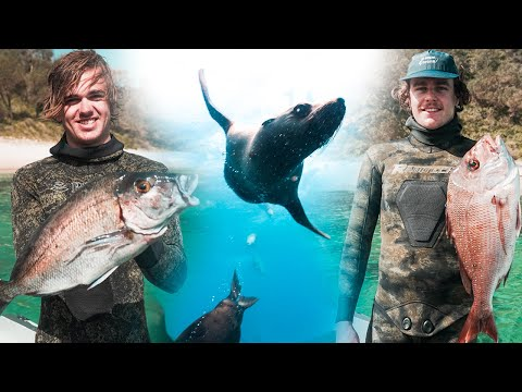 Spearfishing A Mixed Bag W/ Offshore Adventures (Amazing Seals) - FISH EGGS Catch And Cook
