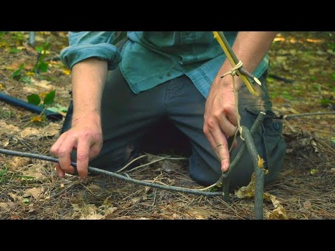 How To Make a Tree Spring Survival Trap