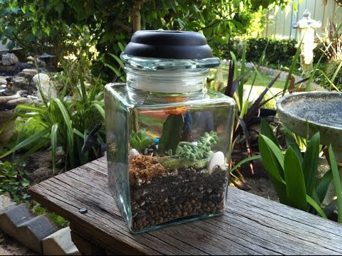 vote no on diy terrarium selbst bauen. Black Bedroom Furniture Sets. Home Design Ideas