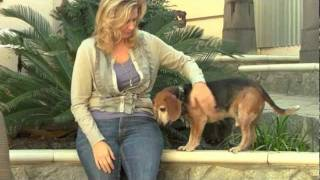 The Dog Lived book trailer #2