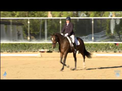 USDF Introductory Level Purpose and Directives.