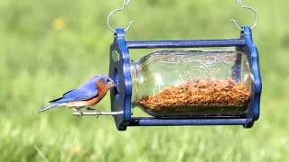 Duncraft Bug A View Jar Bluebird Feeder 4346