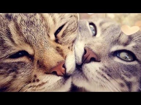 картинки с кошками с добрым утром