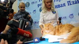 Знакомьтесь: самый большой кот Украины!