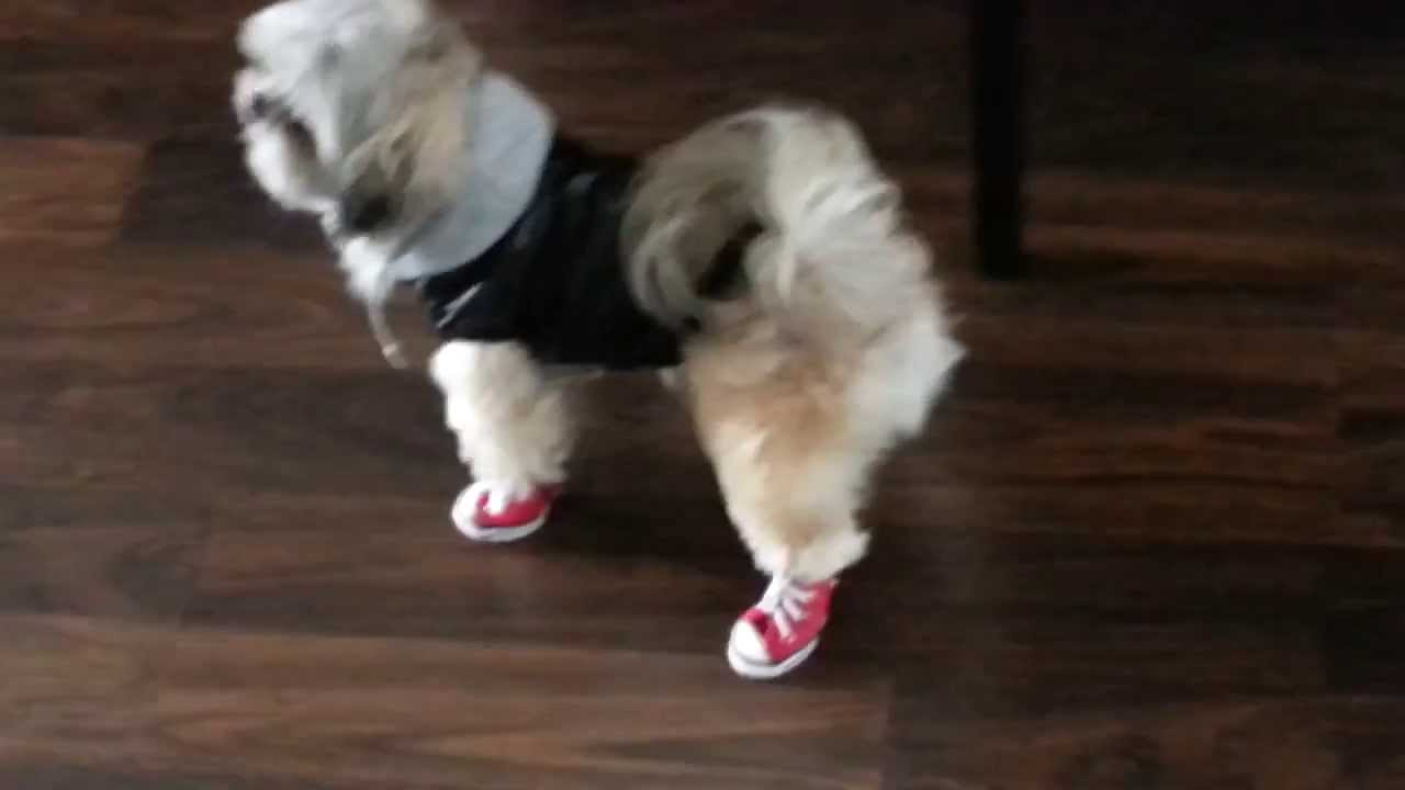 Converse Shoes For Pets