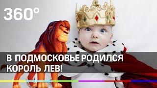 Смотреть видео Мальчик Король Лев родился в Подмосковье! онлайн