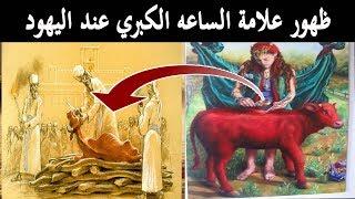 """إستنفار في إسرائيل!! وإعلان نهاية العالم بـ هدم المسجد الاقصي وبناء الهيكل بعد ولادة""""البقرة الحمراء"""""""